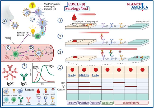 Figure 1. COVID-19 Serology Tests (Antibody Tests)